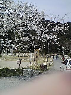 Re:花見に行って来たよ〜(*^o^*)
