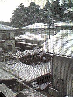 雪だ〜積もったよ(°o°;;