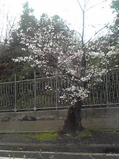 4月だ〜(*^-')b