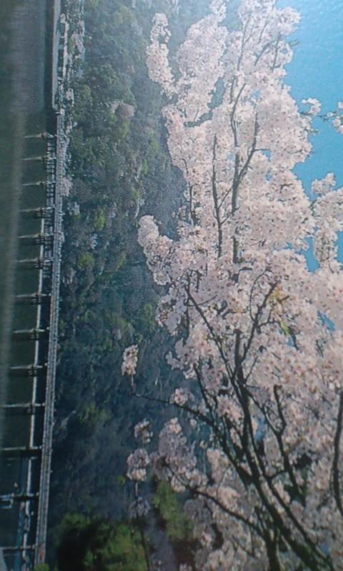嵐山だ〜!(b^ー°)