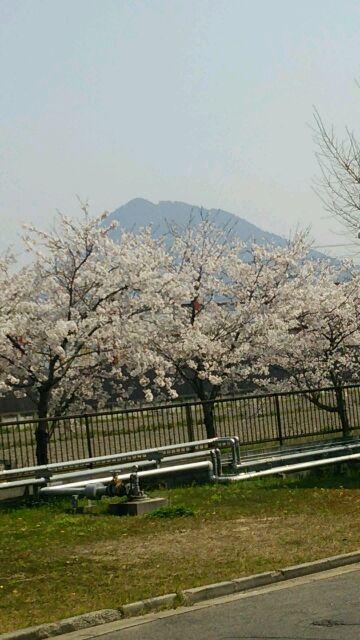 春だなぁ〜ヾ(@゜▽゜@)ノ